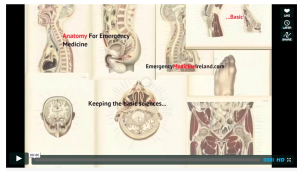 Anatomy video